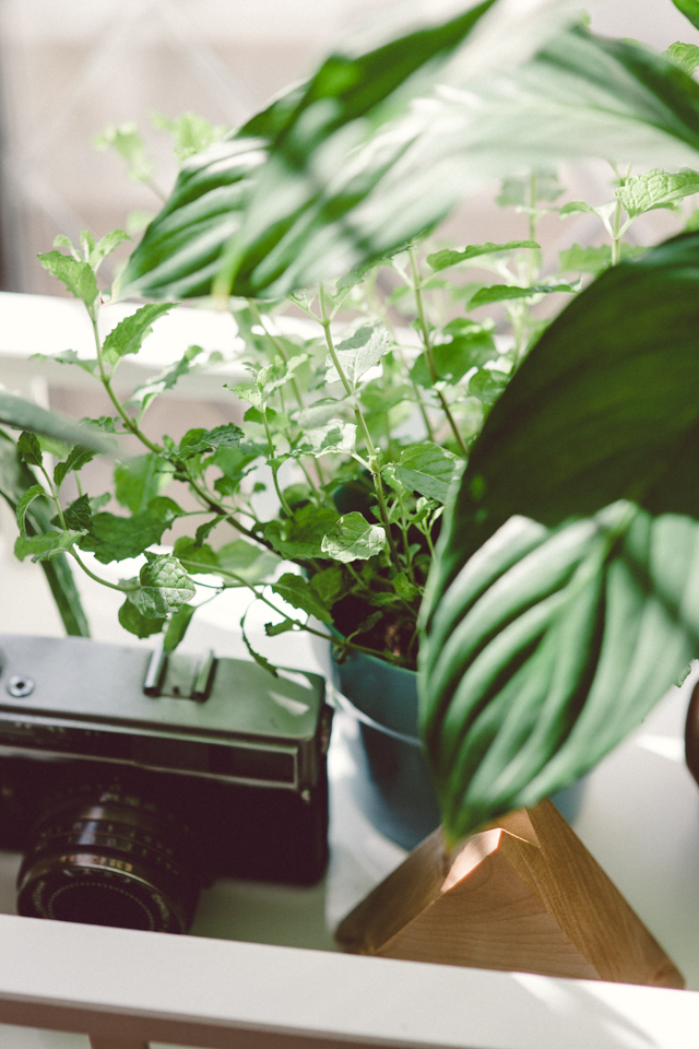 New place (and new plants!) | nathalie.ie