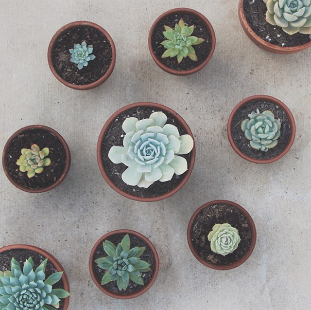 Succulents from @tawwni's Instagram feed | nathalie.ie