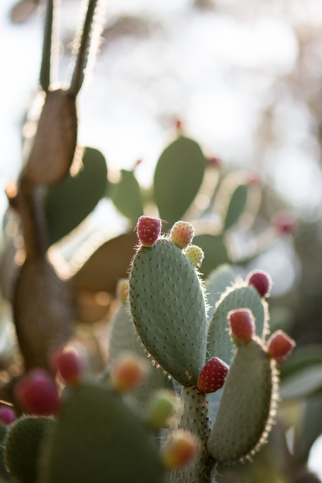 Crushing on Cacti | nathalie.ie
