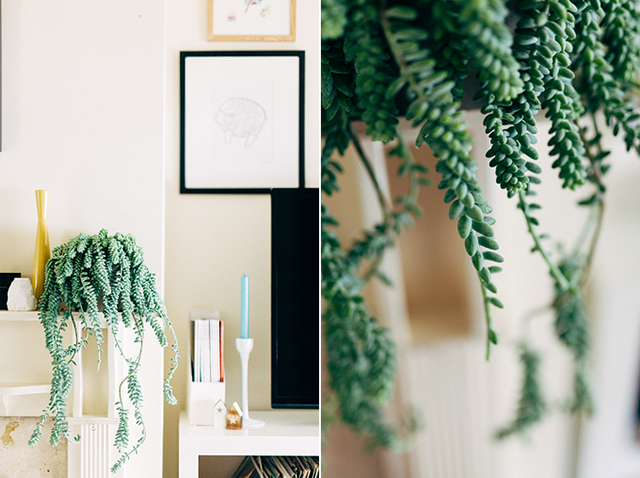 Burro's tail succulent | nathalie.ie
