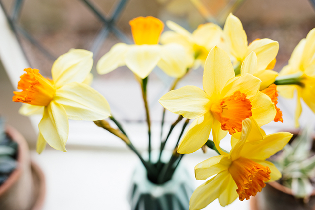 April daffs | nathalie.ie