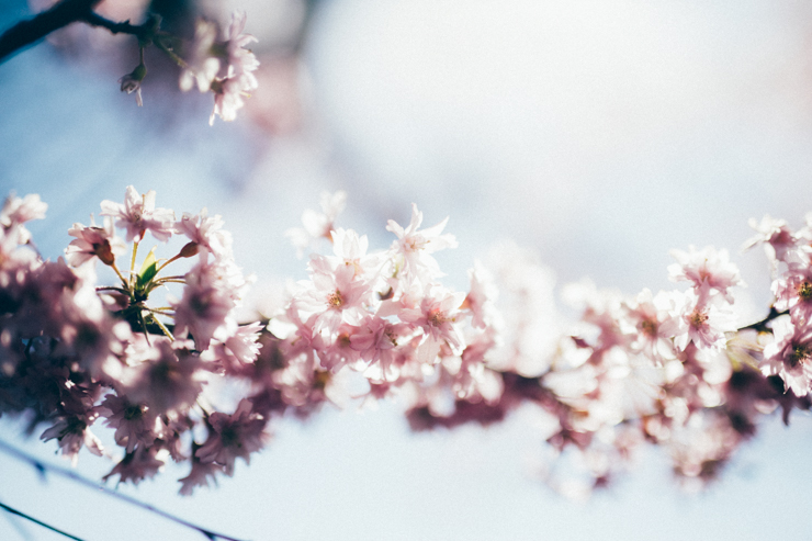 Blue skies + blossoms | nathalie.ie