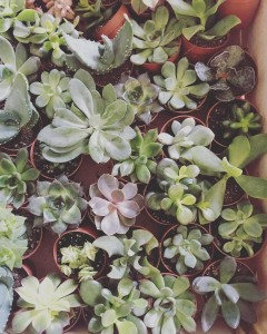 Tons of gorgeous succulents at shopthegarden for DublinDesignNight with imageinteriorshellip