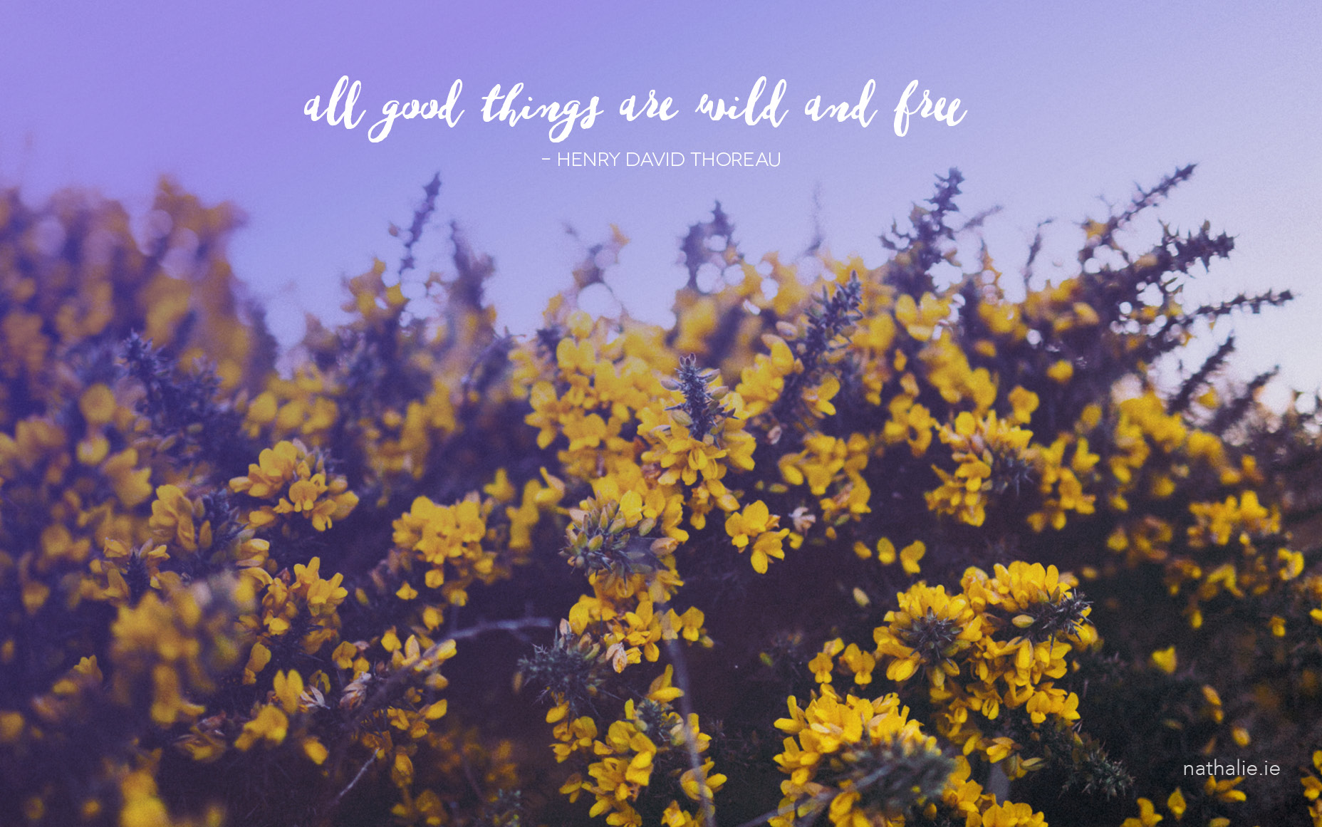 Donegal Gorse: Free Travel Desktop Downloads | nathalie.ie