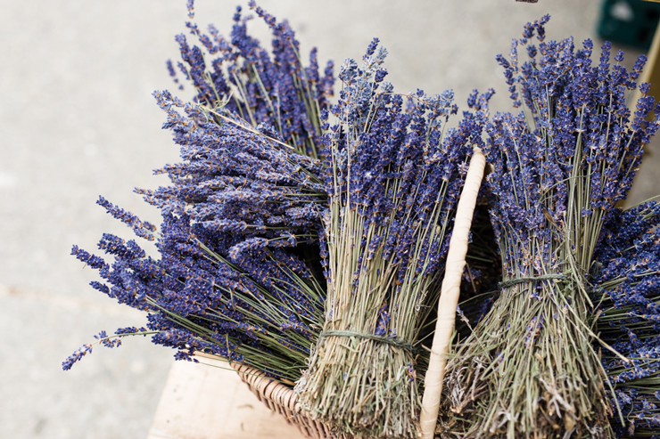 Summer lavender harvest in Wicklow | nathalie